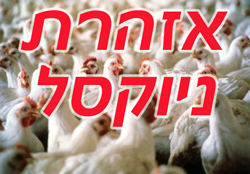 ניוקסל- הודעה למדגריות ומכוני תערובת-כפר מונש