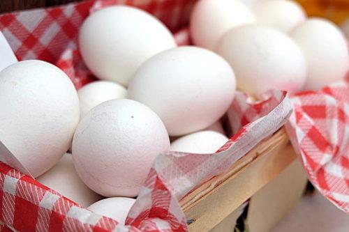 ביצים