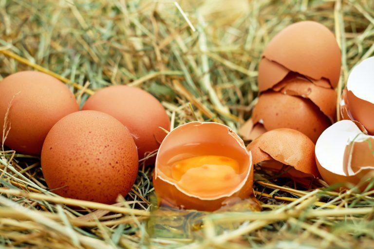 ענף הביצים האורגניות בישראל – תמונת מצב