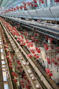 נוהל תמיכה מנהלי - פסולת חקלאית
