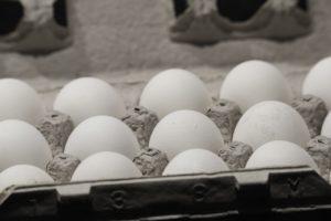 סקר הביצים: לא עוד אגירת מזון