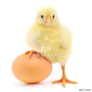 תחשיב הוצאות יצור ביצי רביה כבדה למשוכנת לחודש מאי 2020