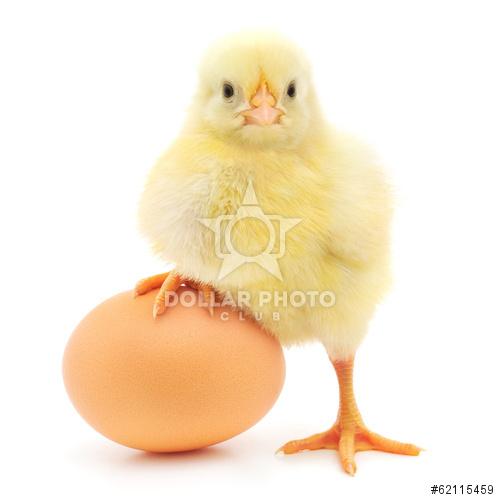תחשיב הוצאות יצור ביצי רביה למשוכנת לחודש מרץ 2017