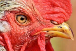 תחשיב הוצאות יצור ביצי רביה למשוכנת לחודש ספטמבר 2020