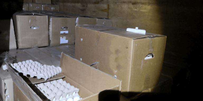הברחת 30,000ביצים פעילות פיצוח-ירושלים_משרד החקלאות